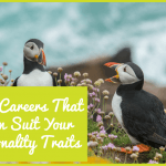The Careers That Can Suit Your Personality Traits By #newtohr